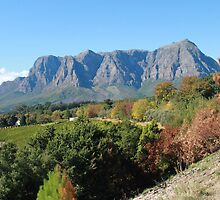 Stellenbosch wine country by jozi1