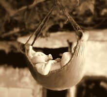 Ham hock in a Hammock by Nancee Rainaud