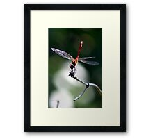 Dragon-fly Framed Print