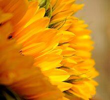 Sunflower Petals doubles by Karen  Betts