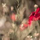 Poppy World by Sarah-fiona Helme