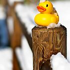 Happy duck by Roberto Panciatici