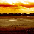 Fields on Fire by C. Michael Cox