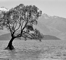 Stand - Queenstown, New Zealand by Jason Weigner