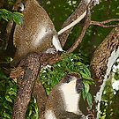 three in a tree by Ted Petrovits