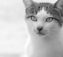 Volterra Kitty Italy by Sandy Taylor