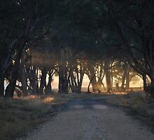 light rods, misty morning, rutherglen, australia by Georgina James