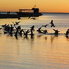 Sea gulls, Coral Bay, sunset by ladieslounge