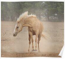 Bucking Dust! Poster