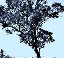 Tree - Silhouette in Blue .  by snapfest