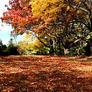 carpet of leaves by Carol  Lewsley