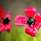 Wild Red Poppies taken in Crimea  by a1luha