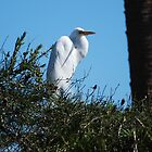 White City Egret by boliver