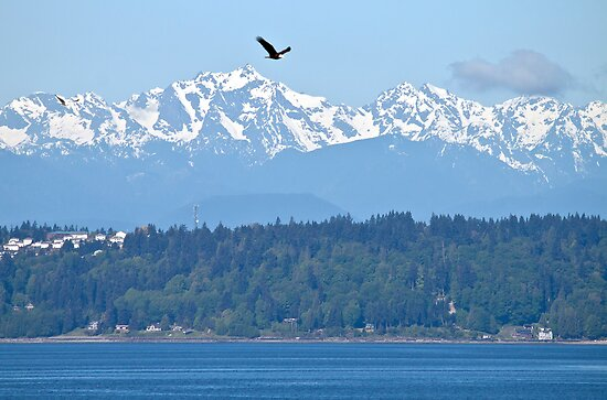 As the Eagle Soars by Barb White