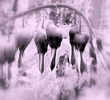 fairyland bleeding hearts, lavender tint by Dawna Morton