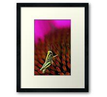 Rugged Landscape -- Grasshopper on Coneflower Framed Print