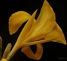 Yellow On Black by Barbara Zuzevich