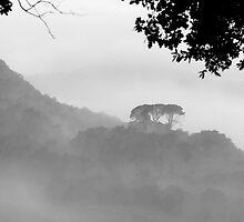 Morning Mist Nr Volterra Tuscany Italy by Sandy Taylor