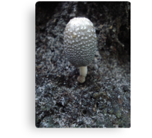 Mushroom on Magnolia Canvas Print