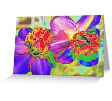 Colorful daffodils Greeting Card