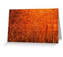 Fields of Golden Grain Greeting Card