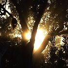 Gums & Sunbeams by debsphotos