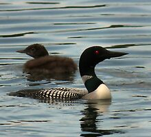 Common Loon and Chick by by M LaCroix