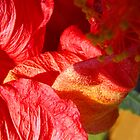 Wilting Hibiscus by Ruth Palmer