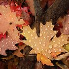 Fallen Maple Leaves by David Kocherhans