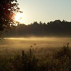 Misty Morning Meadow by Michele Simon