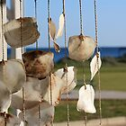 Shells hanging, Cervantes store, winter morning by ladieslounge