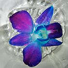 Floating Orchid by Caren Grant