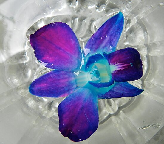 Floating Orchid by Caren