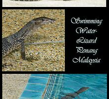 Swimming Water Lizard, Penang, Malaysia by Keith Richardson