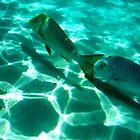 Spangled Emperor 4, Ningaloo Reef, Coral Bay by ladieslounge