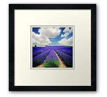 Lavender Field - (3a) Framed Print