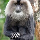 Lion- tailed macaque by angeljootje