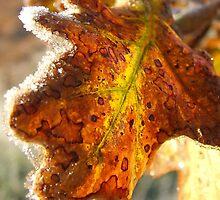 Leaf-light by kurrawinya
