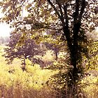 tree at the lake by bdorlac