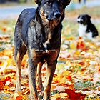Dog in brightly colored autumn leaves by a1luha