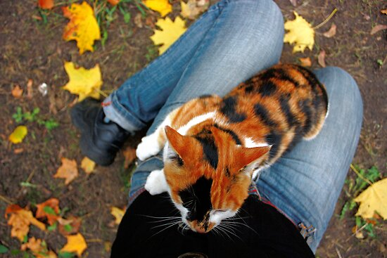 cat sitting on legs in autumn by a1luha