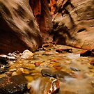 Kanarra Creek Slot Canyon by Sam Scholes
