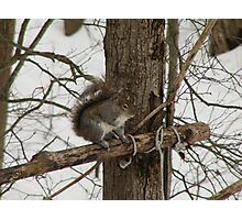 Squirell Waiting For Dinner Photographic Print