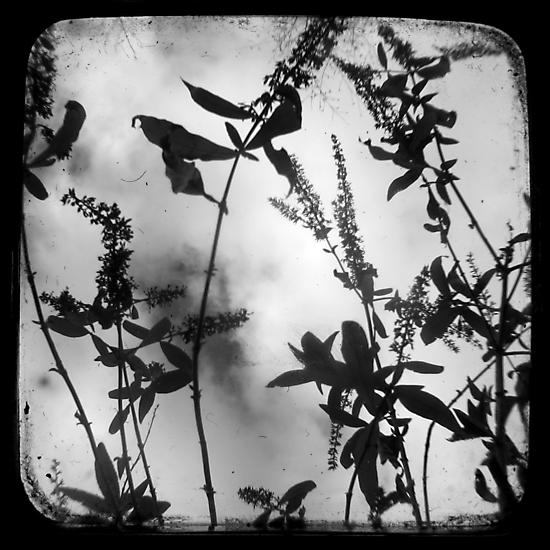 Died Pretty - TTV by Kitsmumma