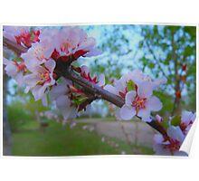 Flowering Shrub Poster