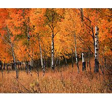 Fire Grove Photographic Print