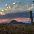 Cactus at Sunset at Picacho Peak Arizona by MattGranz