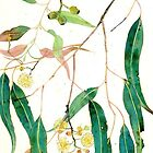 eucalyptus leaves by Gabby Malpas