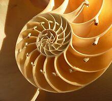 Spiral perfection by Carol Walker