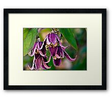 Rich Purple Framed Print